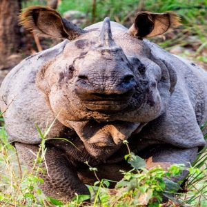Chitwan Wildlife Photography Tour